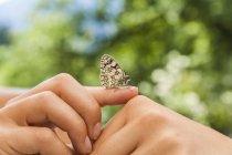Schmetterling auf weibliche Hände — Stockfoto