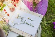 Allemagne, Saxe, planche à dessin, papier et fleurs de camomille — Photo de stock