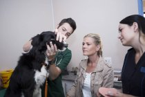 People at a veterinarian examining Border Collie — Stock Photo