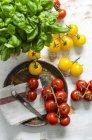 Amarillo y rojo tomate con albahaca - foto de stock