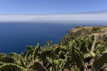Portugal, Madeira, View to coast with cacti — Stock Photo
