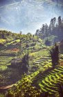 Vietnam, Sa Pa, terraced fields during daytime — Stock Photo