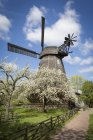 Germany, Berlin-Britz, windmill and blossoming cherrry trees — Stock Photo