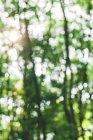 Desfocado floresta durante o dia no fundo desfocado — Fotografia de Stock