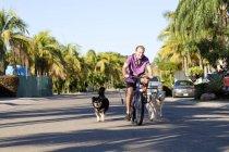 Senior fährt mit zwei Hunden auf Fahrrad — Stockfoto