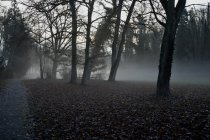 Germany, Sigmaringen, early morning fog in the garden of the prince in winter — Stock Photo