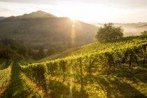 Австрии, Штирии, Лойчах, Виноградники Винный маршрут — стоковое фото