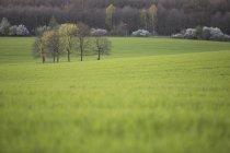 Vue du champ vert et du groupe d'arbres de jour, Flaeming, Brandebourg, Allemagne — Photo de stock