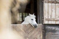 Сірий, дивлячись з stable — стокове фото