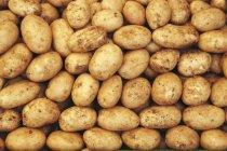 Batatas cruas na pilha — Fotografia de Stock