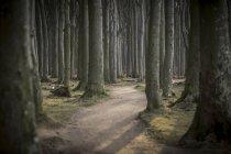 Pista forestal de Alemania, Nienhagen, en Gespensterwald - foto de stock
