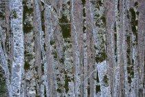 España, Parque Nacional de Ordesa, patrones en roca - foto de stock
