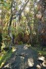 Estados Unidos, Hawái, Isla Grande, Parque Nacional de los Volcanes, sendero a través del bosque en Kilauea Iki - foto de stock