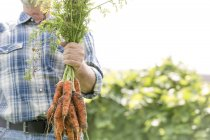 Farmer holding bunch of carrots — Stock Photo