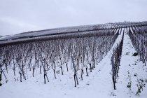 Germany, Wuerzburg, vineyard in snow at winter — Stock Photo