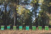 Grécia, colmeias verdes, árvores no fundo — Fotografia de Stock