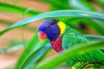 Malasia, Pahang, Parque Nacional Taman Negara, colorido pájaro posado en el árbol - foto de stock