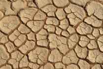Африка, Намибия, Sossusvlei, мертвые Vlei, сломанной поверхность соли и глины Пан — стоковое фото