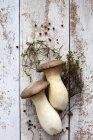 Cogumelos trompete rei — Fotografia de Stock