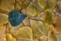 Foglie polari in autunno durante il giorno — Foto stock