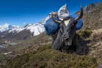 Непал, Кхумбу, як область, Дінгбоче, Еверест з завантаженням денний час — стокове фото
