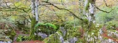 Испания, Наварра, Природный парк Urbasa-Andia — стоковое фото