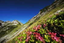 Austria, Altenmarkt-Zauchensee,  view of slope with flowers  during daytime — Stock Photo