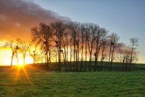 Spanien, Provinz Zamora, Sonnenaufgang über dem Feld mit Weißstörche auf Bäumen — Stockfoto