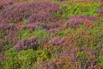 France, Pointe de Pen-Hir, Field of wild flowers during daytime — Stock Photo