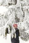 Germany, Baden-Wuerttemberg, Waldshut-Tiengen, smiling man in snow-capped fir tree — Stock Photo
