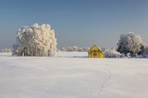 Estonia, yellow wooden house in snowy landscape — Stock Photo