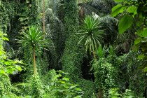 Uganda, Bwindi Impenetrable National Park, Bwindi Impenetrable Forest — Stock Photo