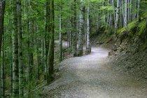 Spanien, Nationalpark Ordesa, Waldweg mit Bäumen am Tag — Stockfoto
