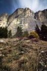 Italie, Trentin-Haut-Adige, Dolomites, faible angle de vue de pré — Photo de stock