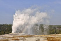 USA, Wyoming, Yellowstone National Park, Old Faithful Geyser erupting — Stock Photo