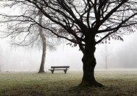 Autriche, Mondsee, banc de parc et bouleau dénudé dans la brume matinale — Photo de stock