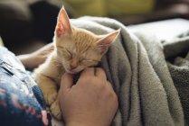 Табби-котенок спит на коленях у женщины — стоковое фото