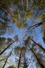 Германия, Баден-Вюртемберг около Тубингена, верхушки деревьев — стоковое фото