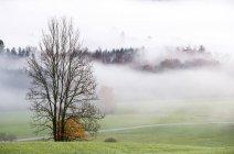 Bosque otoño Austria, Mondsee, en niebla de la mañana - foto de stock