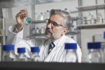 Scientifique en laboratoire examinant le liquide dans une fiole à fond rond — Photo de stock