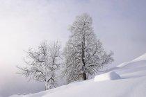 Германия, Бавария, верхней Баварии, Мангфалль горы, Hocheck вблизи Обераудорф, снег покрыты деревья — стоковое фото