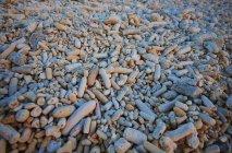 Caraibi, Antille olandesi, Bonaire, pietre sulla spiaggia rosa — Foto stock