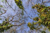 Costa Rica, plantes de liane, faible angle vue — Photo de stock