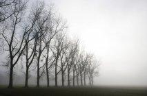 Autriche, Mondsee, rangée d'arbres nus dans la brume matinale — Photo de stock