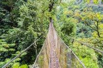 Коста-Ріка, джунглі, підвісний міст над дерев — стокове фото