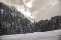 Germany, Bavaria, Grasgehren skiing area and trees over snow — Stock Photo