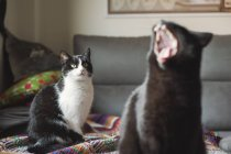 Cat watching another cat yawing on blanket — Stock Photo