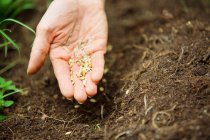 Close up of Woman's hand with seeds — Stock Photo
