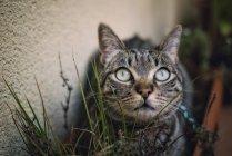 Gato escondido entre as plantas no terraço — Fotografia de Stock