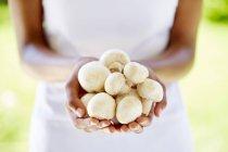 Mãos femininas segurando cogumelos — Fotografia de Stock